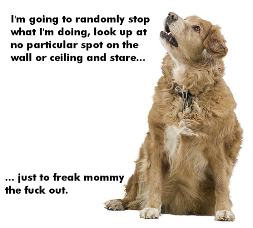 dog-freak-mommy-out