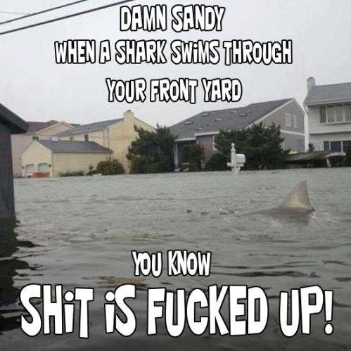 hurricane-sandy-shark-in-yard