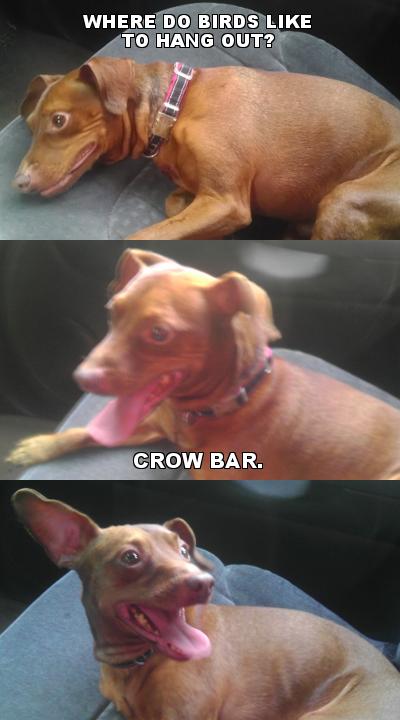 little-redd-pun-dog-crow-bar