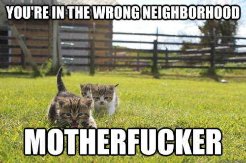 wrong-neighborhood-cats
